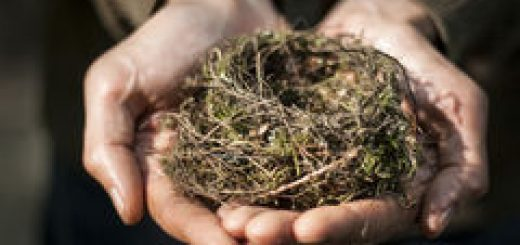 hands-holding-nest-stock-photo-46886541